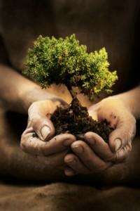 tree_habits